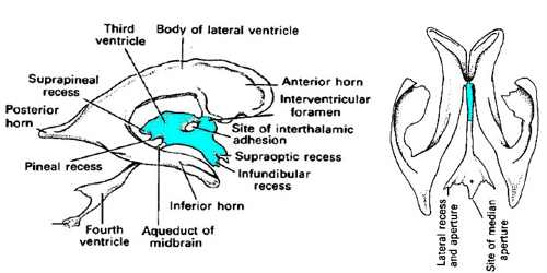 third ventricle