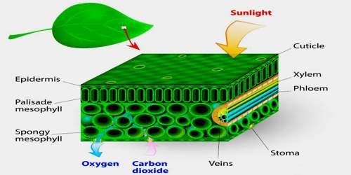 cyanobacteria assignment point