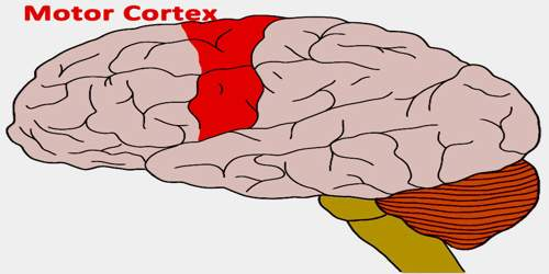 Motor Cortex Assignment Point