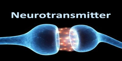 About Neurotransmitter