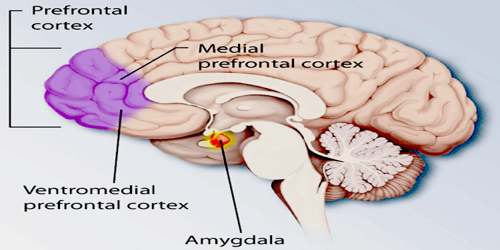Prefrontal Cortex - Assignment Point