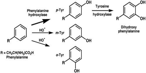 Tyrosine Assignment Point