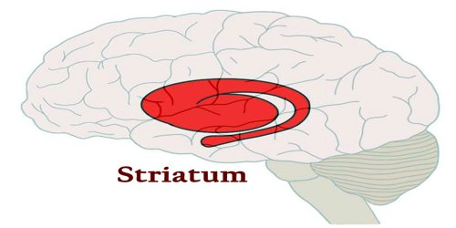 Striatum Assignment Point