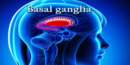 Basal Ganglia Assignment Point