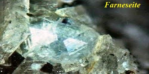 Farneseite