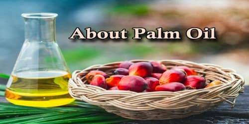 About Palm Oil