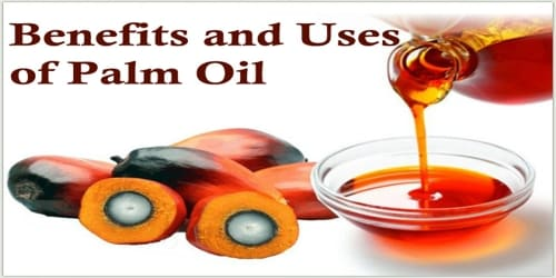 Benefits and Uses of Palm Oil