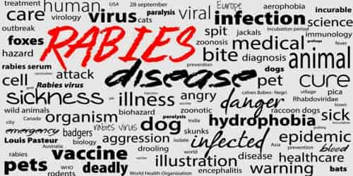 Rabies (Causes, Symptom and Prognosis)