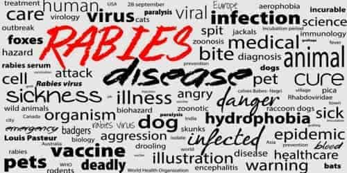 Rabies (Diagnosis, Treatment and Prevention)