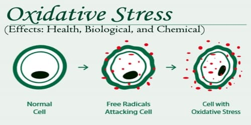 Oxidative Stress (Effects: Health, Biological, and Chemical)