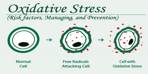Oxidative Stress (Risk factors, Managing, and Prevention)