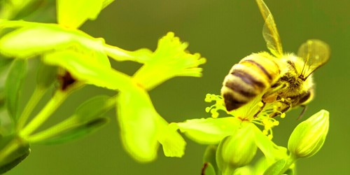 A Very Useful Insect – Bee