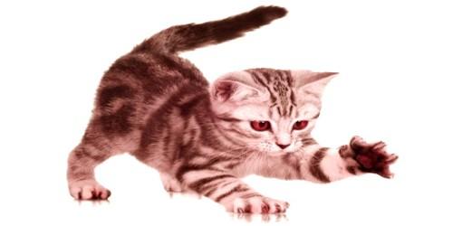 Pat Animal – The Cat
