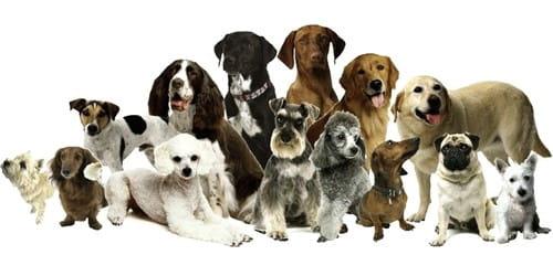 The Dog – Most Faithful Animal