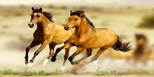 The Horse – Wonderful Creature