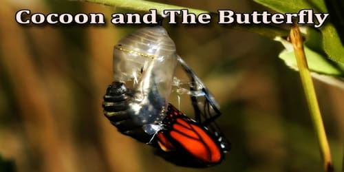 Cocoon and the Butterfly
