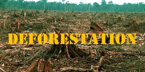 Deforestation and its Impact