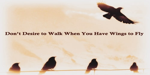 Don't Desire To Walk When You Have Wings To Fly