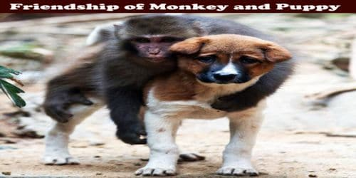 Friendship of Monkey and Puppy