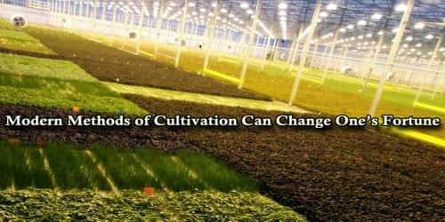 Modern Methods of Cultivation Can Change One's Fortune