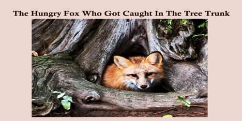 The Hungry Fox Who Got Caught In The Tree Trunk