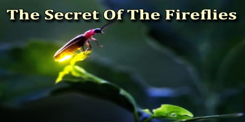 The Secret Of The Fireflies