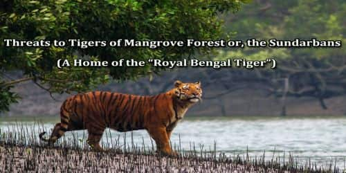 Threats to Tigers of Mangrove Forest or, the Sundarbans