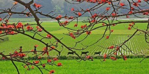 The Spring in Bangladesh