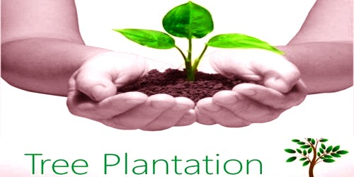Advantages of Tree Plantation