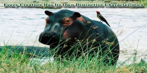 Every Creature Has Its Own Distinctive Characteristics