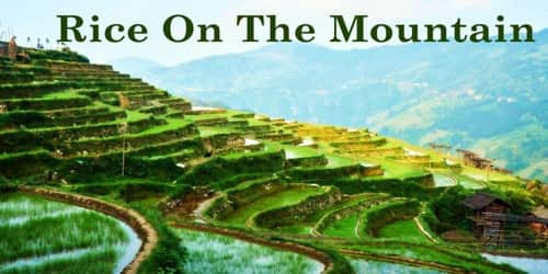 Rice On The Mountain