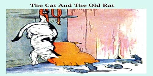 The Cat And The Old Rat