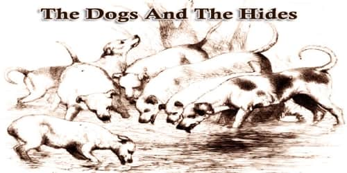 The Dogs And The Hides