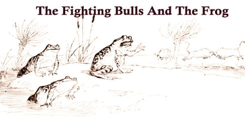 The Fighting Bulls And The Frog