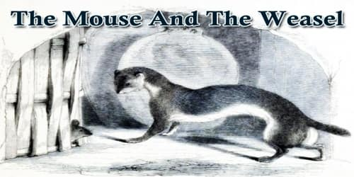 The Mouse And The Weasel