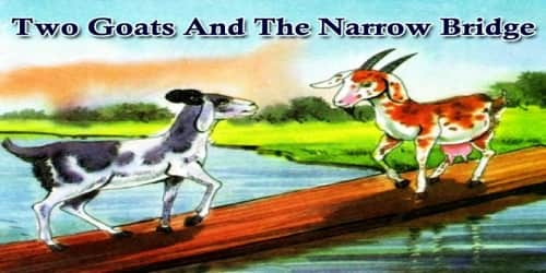 Two Goats And The Narrow Bridge