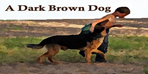 A Dark Brown Dog