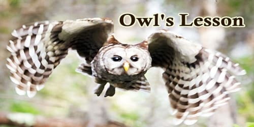 Owl's Lesson