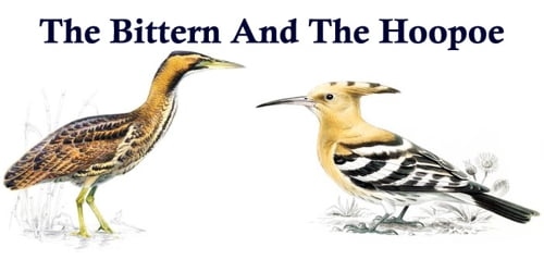 The Bittern And The Hoopoe