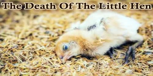 The Death Of The Little Hen