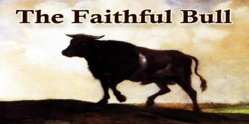 The Faithful Bull