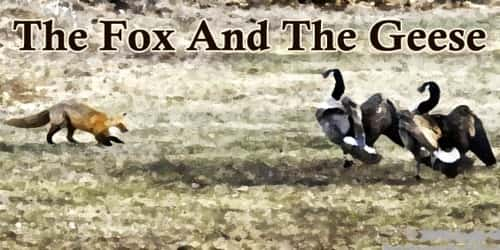 The Fox And The Geese