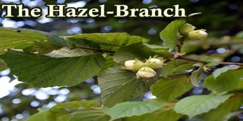 The Hazel-Branch