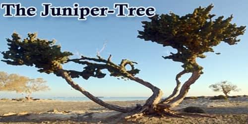 The Juniper-Tree