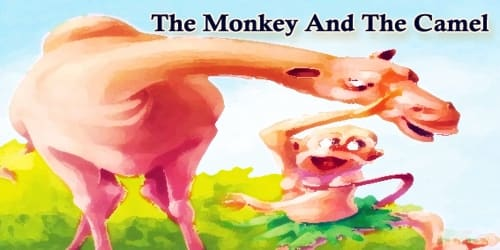 The Monkey And The Camel