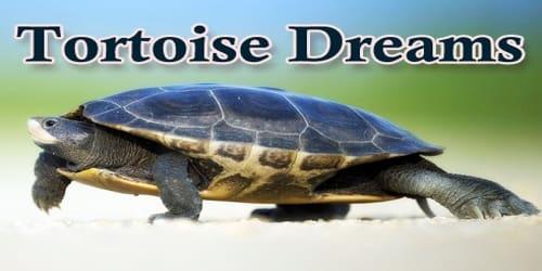 Tortoise Dreams