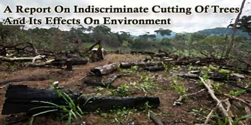 A Report On Indiscriminate Cutting Of Trees And Its Effects On Environment