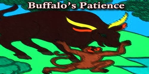 Buffalo's Patience