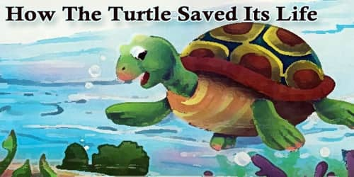 How The Turtle Saved Its Life