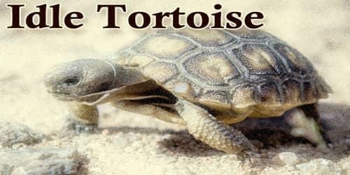 Idle Tortoise